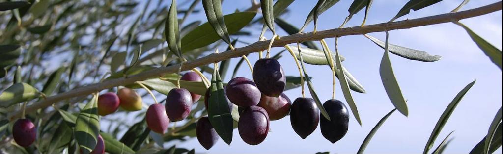 Olives de Nice